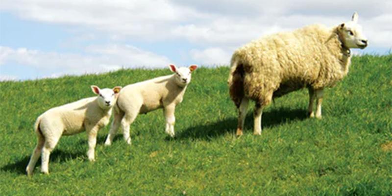 Islam, Animal welfare and updated Legislation